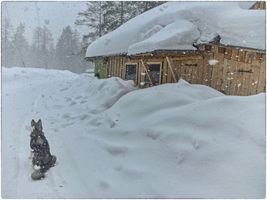 dog and fresh falling snow at Zotto station