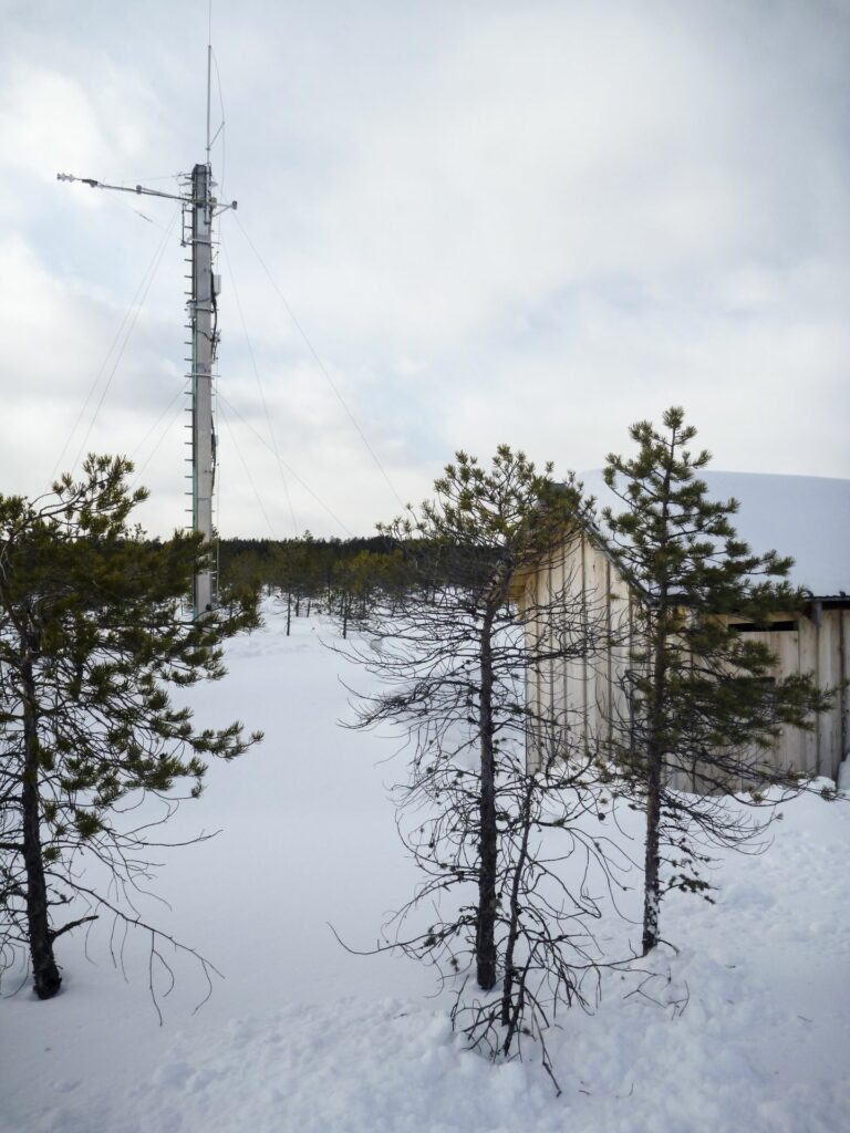 eddytower and hut in winter behind littleSwiss stone pines