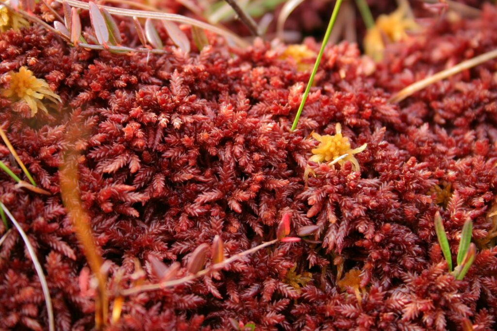 red moss near ZOTTO