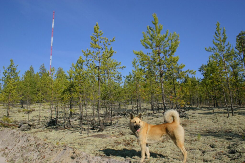 bright dog in front of forest and tower with blue sky