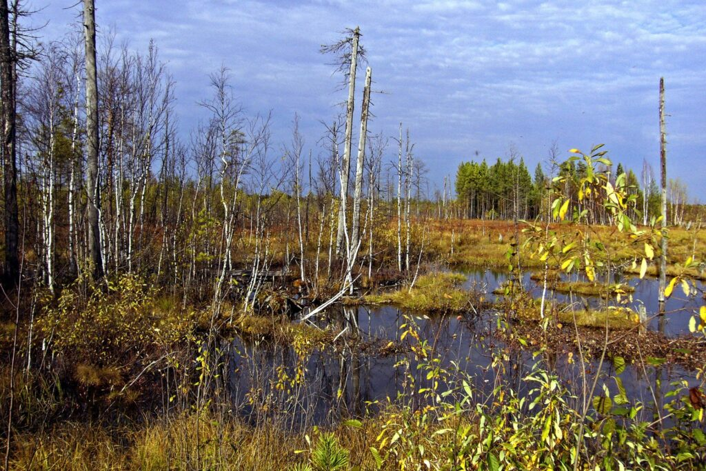 swamp in autumn in the ZOTTO region